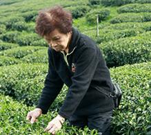 tea-masters-list
