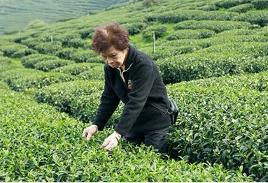tea-masters1